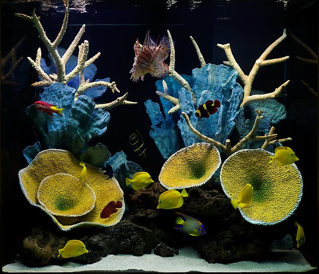 вечный коралловый Риф