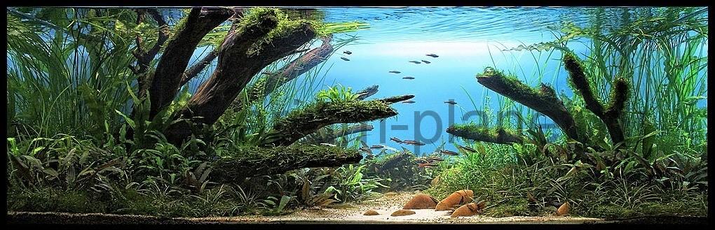 акваскейп аквадизайн